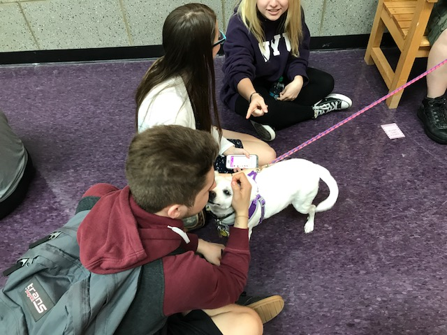 Therapy dogs play fetch with students' hearts