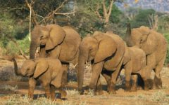 Opinion: Trump's elephant reversal exemplifies moral deficiency